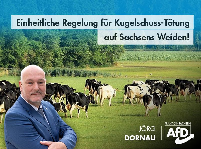 Einheitliche Regelung für Kugelschuss-Tötung auf Sachsens Weiden!