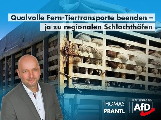 Qualvolle Fern-Tiertransporte beenden – ja zu regionalen Schlachthöfen