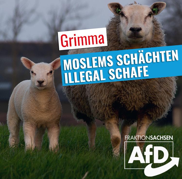 Moslems schächten illegal Schafe