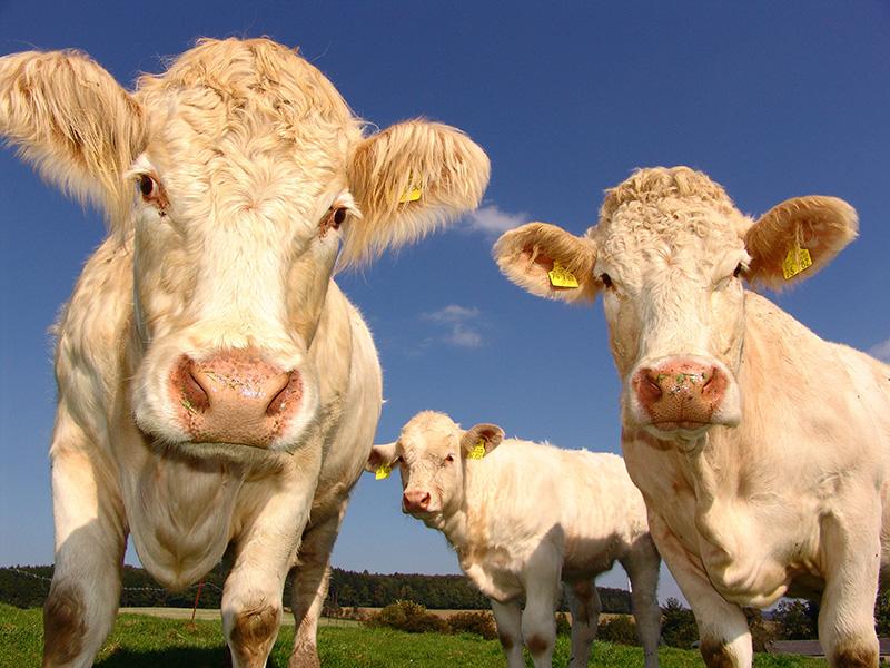 Tiertransporte in Drittländer sofort verbieten!