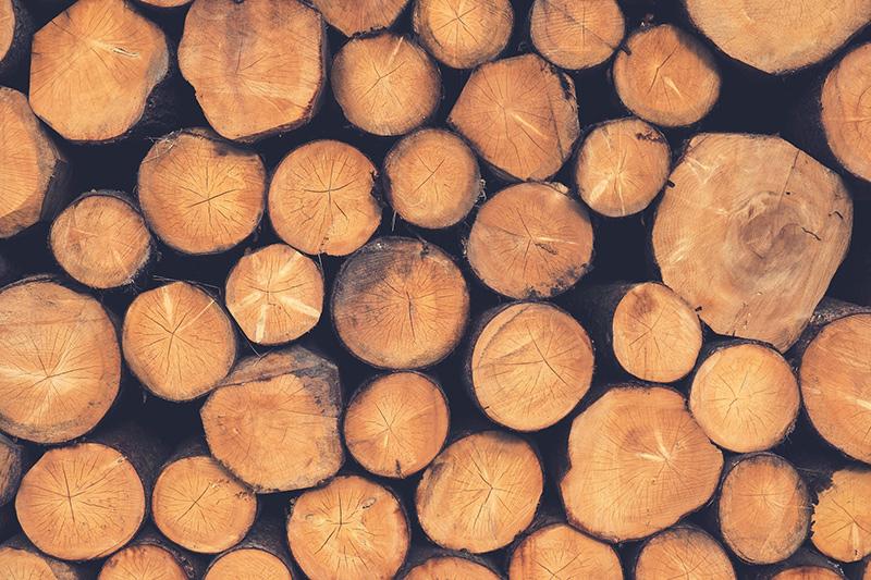 Sozialpädagoge Dulig mit Holzkrise maßlos überfordert!